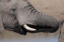 Free Elephant Stock Photos - 15403493