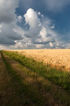 Free Wheat Field Stock Photo - 15404080