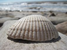 Free Seashell Royalty Free Stock Photos - 15404118