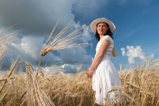 Free Field Of Wheat Royalty Free Stock Photo - 15404155
