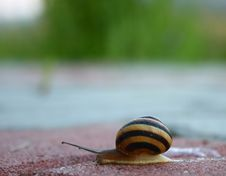 Free Lonely Snail Royalty Free Stock Image - 15404226