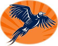 Free Pheasant Bird Flying Up Royalty Free Stock Image - 15404316