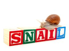 Wooden Blocks With Snail Stock Photos