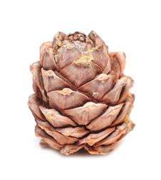Free Great Fir Cone Royalty Free Stock Images - 15406319