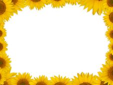Free Sunflowers Royalty Free Stock Images - 15406599