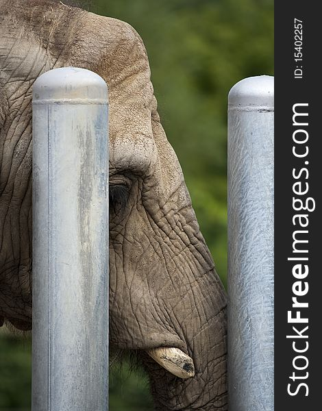 Sad elephant behind bars