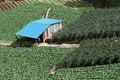 Free Intensive Crop Farming Royalty Free Stock Photo - 15418835