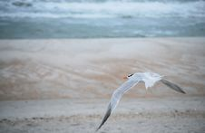 Free Gull Stock Photography - 15410312