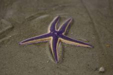 Free Starfish Purple Royalty Free Stock Image - 15415646