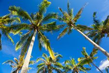 Free Palms On The Beach Stock Photo - 15417410