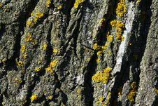 Free Bark Of A Tree Stock Image - 15417791
