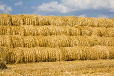 Free Harvest(cleaning) Of Cereals Royalty Free Stock Images - 15418159