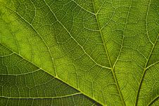 Green Leaf Close-up Stock Photos