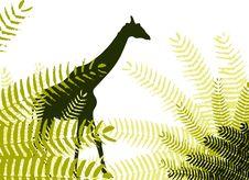 Free Wildlife Stock Photography - 15419892