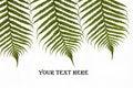 Free Three Ferns Royalty Free Stock Image - 15422186