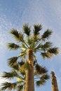 Free Palm Trees Stock Photos - 15423183