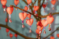 Free Red Heart With Bell Royalty Free Stock Photography - 15423217