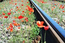 Free Wild Red Poppies Near Railway Stock Photos - 15420653