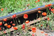 Free Wild Red Poppies Near Railway Royalty Free Stock Photography - 15420757