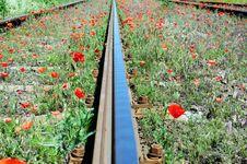 Free Wild Red Poppies Near Railway Stock Photo - 15420860