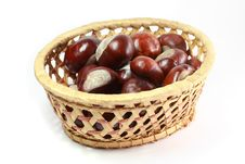 Free Horse Chestnut Stock Images - 15421014