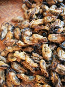 Free Sun Dried Oysters Stock Photos - 15423523
