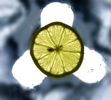 Single Lemon Slice On The Wet Surface Stock Photos