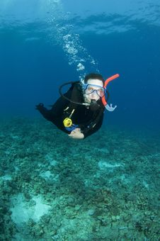 Free Scuba Diver Royalty Free Stock Photography - 15424287
