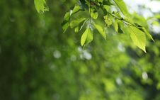 Free Beatiful Green Natural Background Stock Photos - 15424413