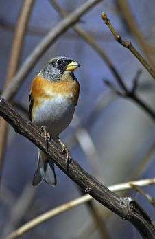 Free Brambling Face To Face Royalty Free Stock Images - 15424819