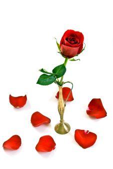Free Rose Stock Photos - 15425473