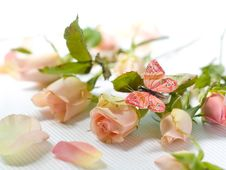 Free Roses Royalty Free Stock Image - 15426116