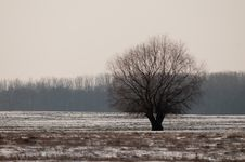 Free Tree In Winter Landscape Royalty Free Stock Photography - 15426727