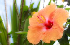 Free Orange Flower Stock Photography - 15427072
