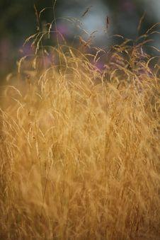 Free Yellow Automn Grass Stock Photos - 15427263