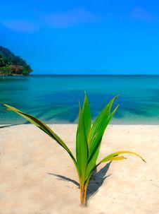 Free Sunny Beach Royalty Free Stock Image - 15427956