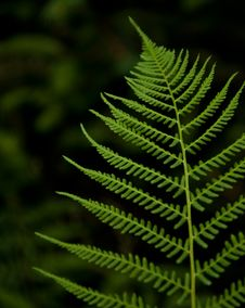 Free Bracken Stock Photography - 15428292