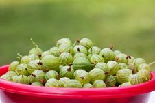 Free Gooseberries Royalty Free Stock Photography - 15429007