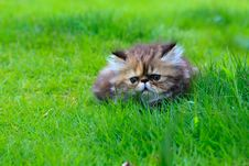 Free Cat Stock Photography - 15429042