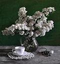 Free Still Life With White Flowers Royalty Free Stock Photos - 15439138