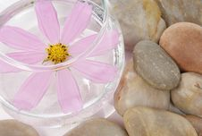 Free Flower And Stones Stock Images - 15431724