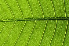 Free Green Leaf Details From A Stock Image - 15431761