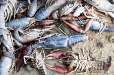 Free Dead Aquatic Products Stock Photography - 15432212