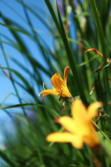 Free Yellow Flowers Stock Image - 15432381