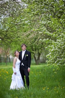 Free Young Wedding Couple Royalty Free Stock Images - 15432469
