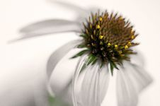 Free Abstract Cone Flower Royalty Free Stock Photography - 15433087