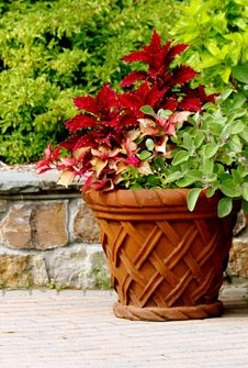 Free Basket Planter Royalty Free Stock Photo - 15433185