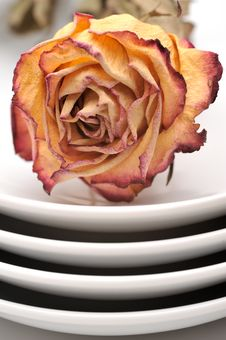 Free Single Dry Rose On A Plate Stock Photos - 15433343