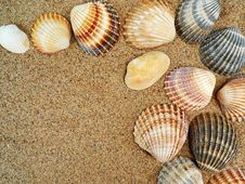 Frame From Shells Stock Photography