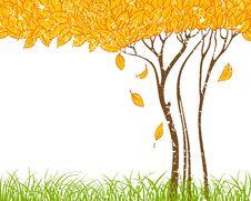 Free Autumn Tree Stock Image - 15437821